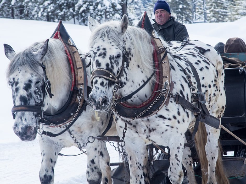 HORSE-DRAWN SLED RIDE