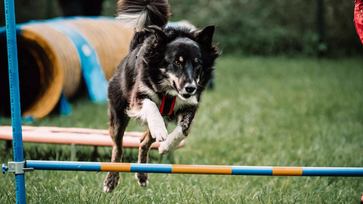 Intensive days - Learn the communication with your dog